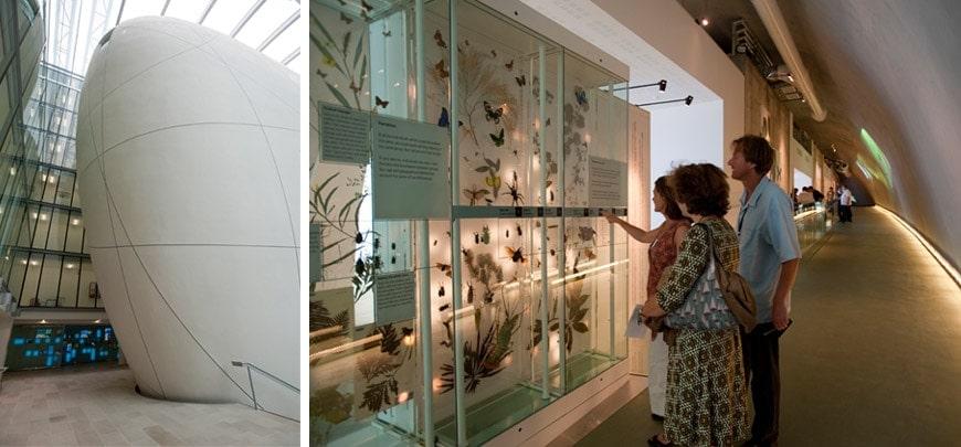Natural History Museum Uk