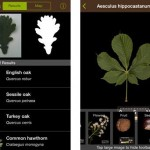 Leafsnap UK – the Tree Identification App