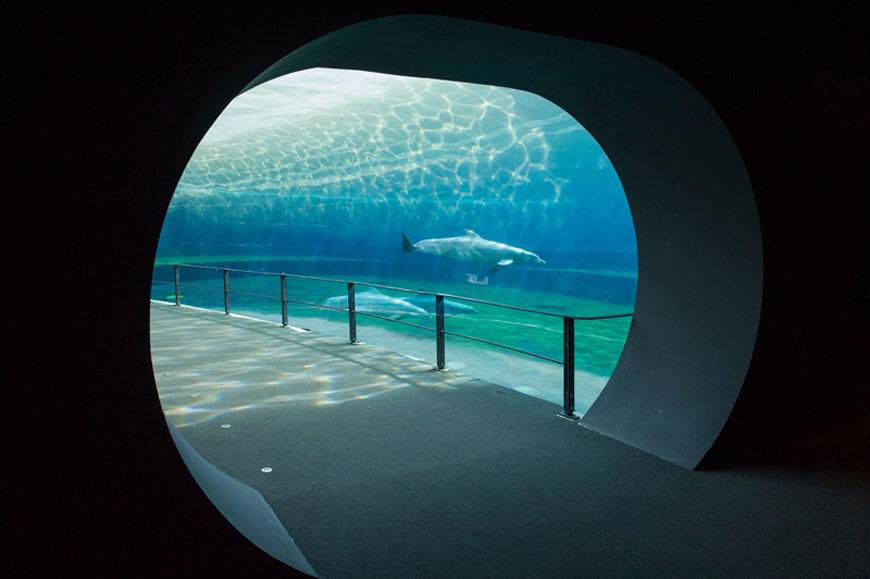 Cetaceans pavilion Aquarium Genoa 01