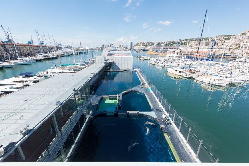 Cetaceans pavilion Aquarium Genoa 02