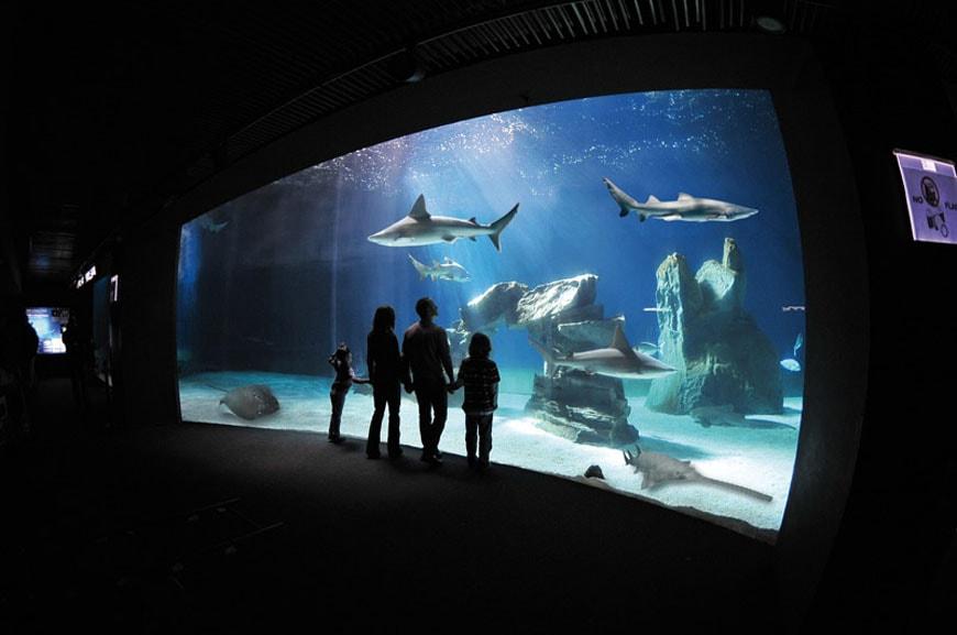 Sharks Aquarium Genoa