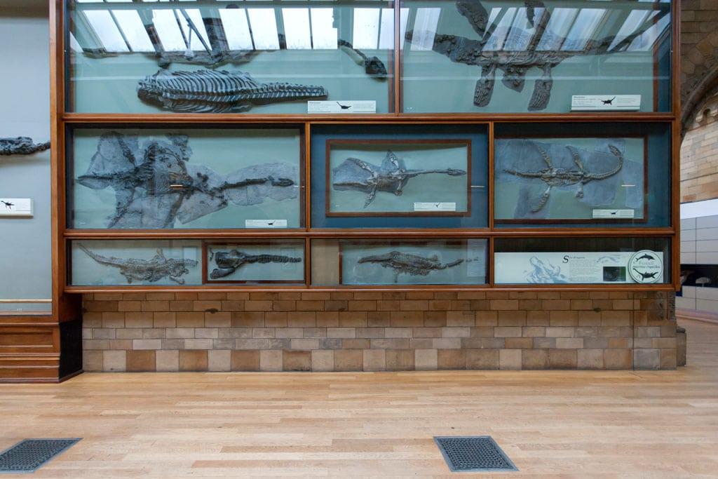 Fossils Natural History Museum London Inexhibit