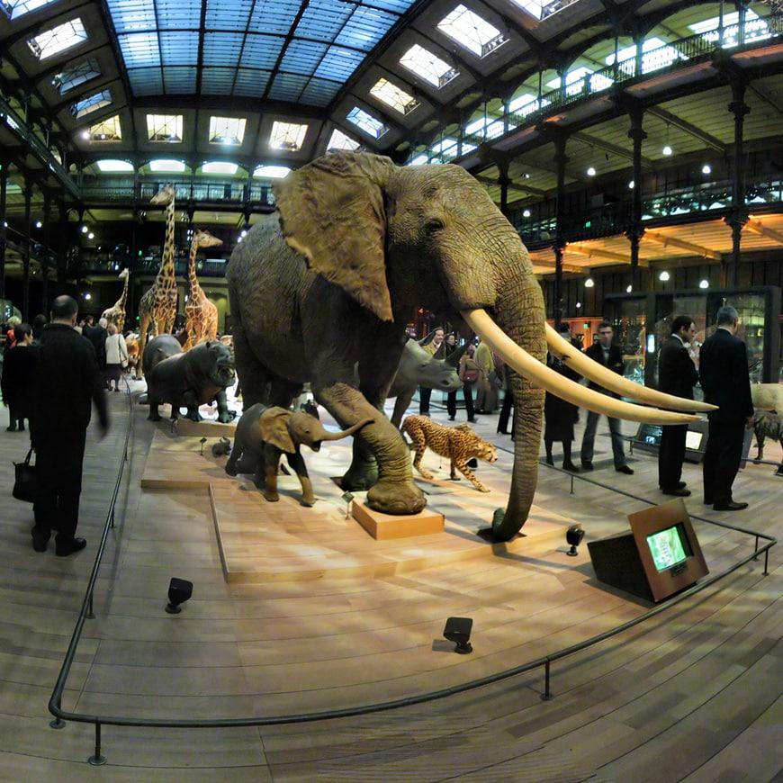 Muséum Histoire Naturelle Paris Jardin des Plantes 10