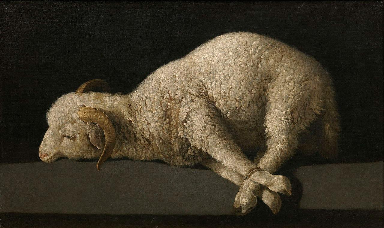 Museo del Prado Madrid sheep Francisco de Zurbarán