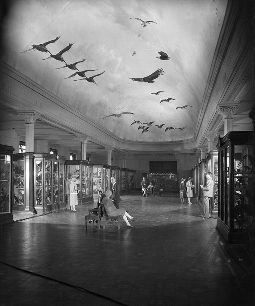 Hall Of Birds Natural Museum
