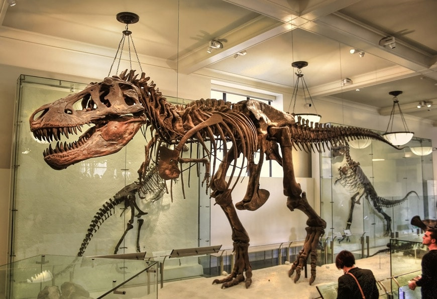 T Rex Natural History Museum New York