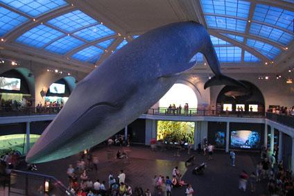 Natural History Museum Nyc Shops