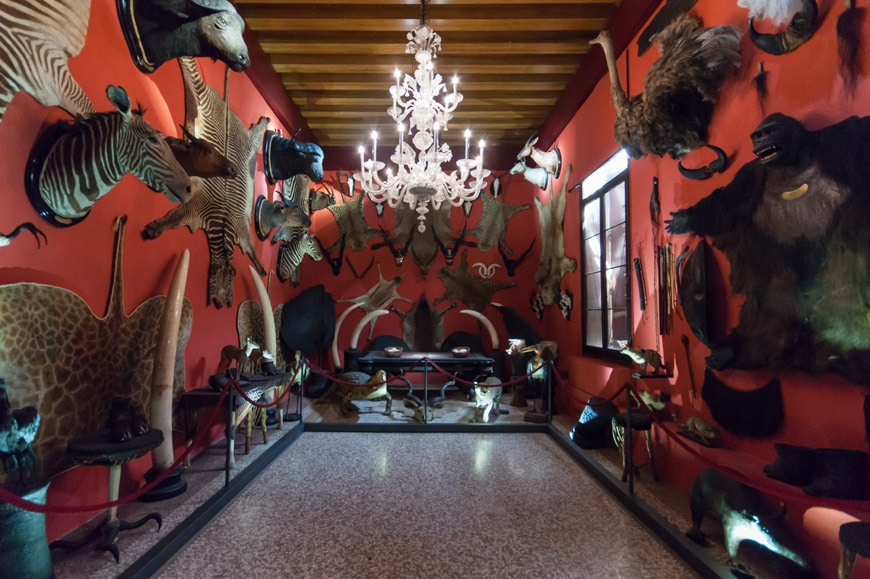 natural-history-museum-venice-12