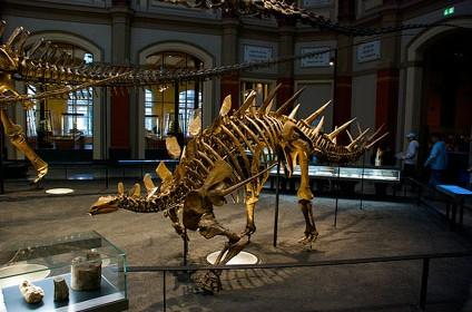 museum fur naturkunde natural history Berlin 02