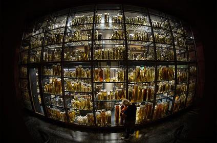 museum fur naturkunde natural history Berlin 05