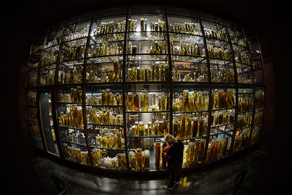 Humboldt Museum Of Natural History Berlin