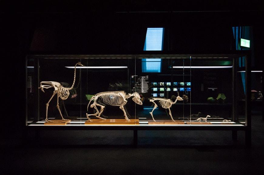 museu blau science museum barcelona 11
