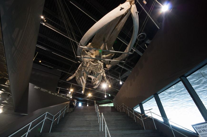 museu blau science museum barcelona 18