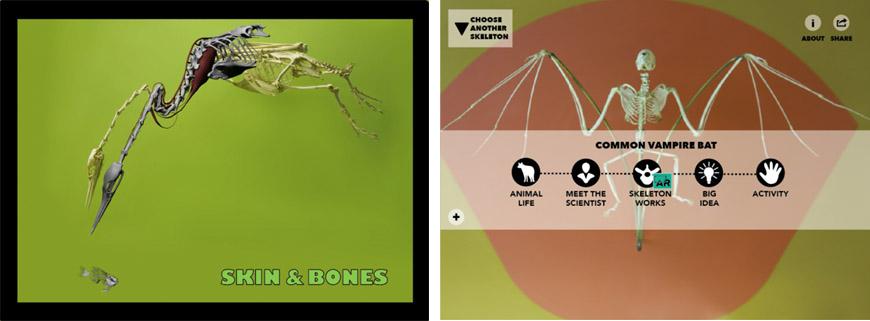 skin bones app natural history museum smithsonian 02