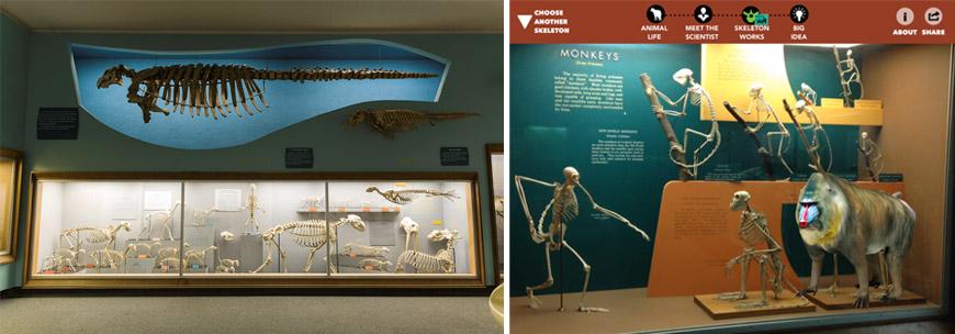 skin bones app natural history museum smithsonian 03