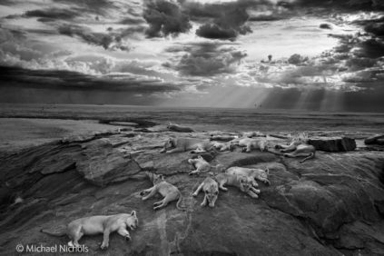 wildlife-photographer-year-NHM-01