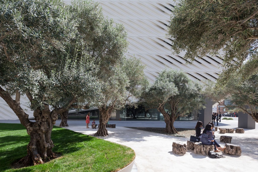 The Broad Plaza LA olive grove
