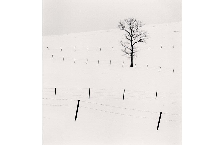 kenna-incisione-brescia-tree-cover