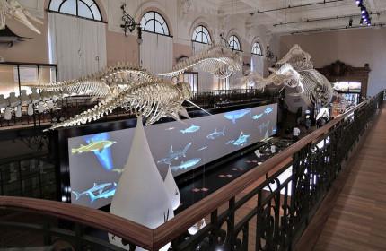 Oceanographic Museum Monaco 08