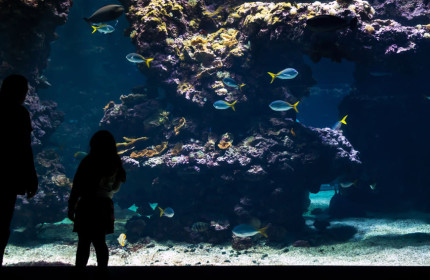Oceanographic Museum Monaco aquarium 03