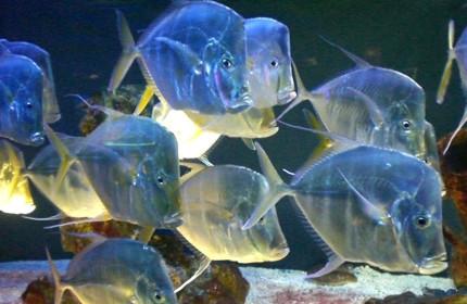 Oceanographic Museum Monaco aquarium 05