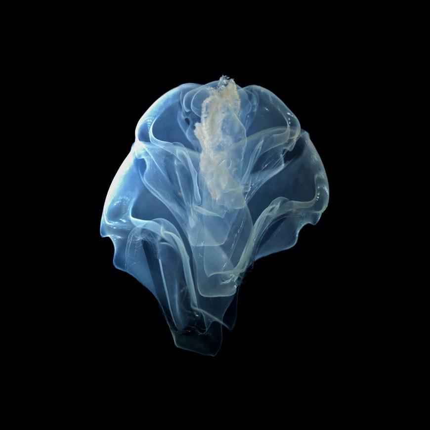 Fondation-Cartier-orchestre-des-animaux-Sardet-plankton-01