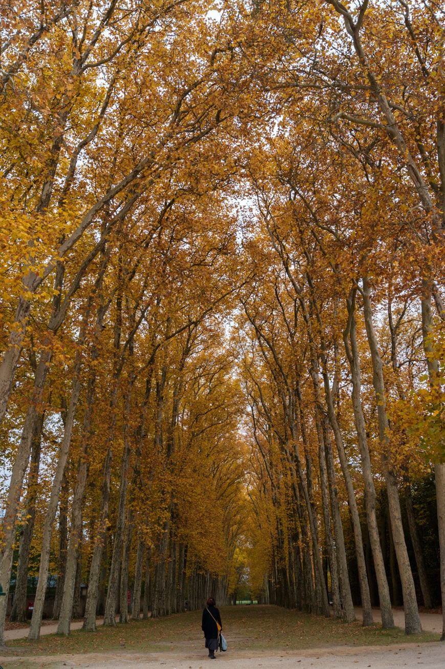 tree-lined-avenue-Versailles-Castle-Inexhibit