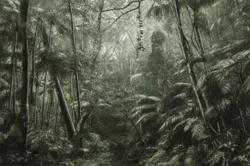 Fond-Cartier-Paris-Trees-cassio-vasconcellos-a-picturesque-voyage-through-brazil-37-2015