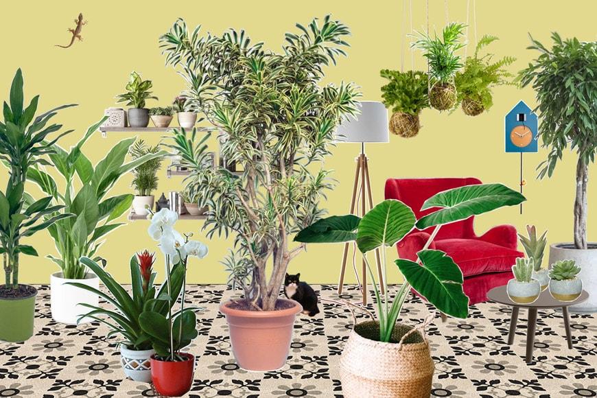 storia-piante-casa.copertina-graphic-design-federica-lusiardi