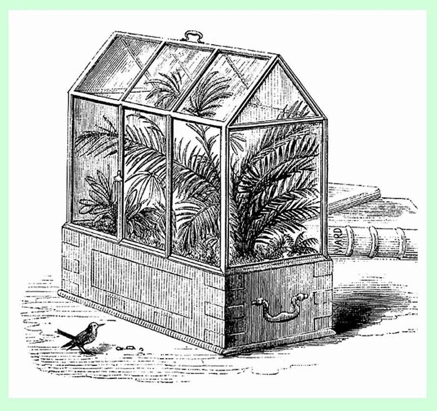 wardian-case-from-botanicswansea-co-uk