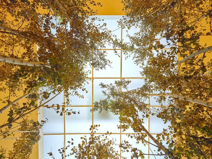 Olafur Eliasson, Our Future is Now, installation view, Museu de Arte Contemporânea de Serralves